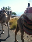 We ran into these fellas in Eilat!